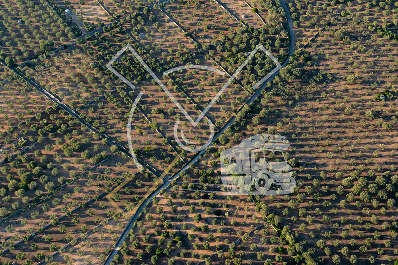 Aerial image of Puglia area in southern Italy showing olive trees farmland with typical trullo buildings.