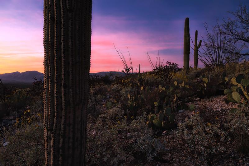 Saguaro sunset close crop.jpg