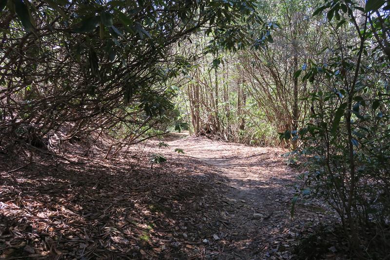 Little Green Creek-Devils Elbow Trail Junction - 3,600'