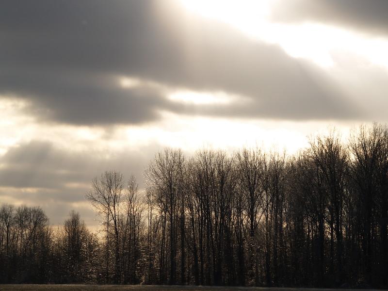 Finally, some sun to illuminate the ice-encased tree- December 2008