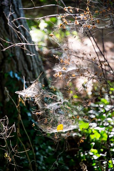 Cobwebs on the Thames Path