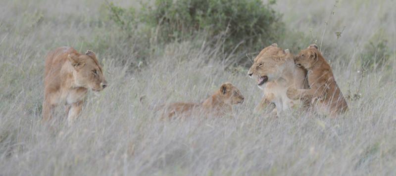 East Africa Safari 363.jpg