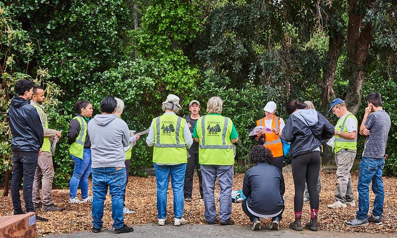 Canopy Tree Planting: Barron Park, 4/20/19