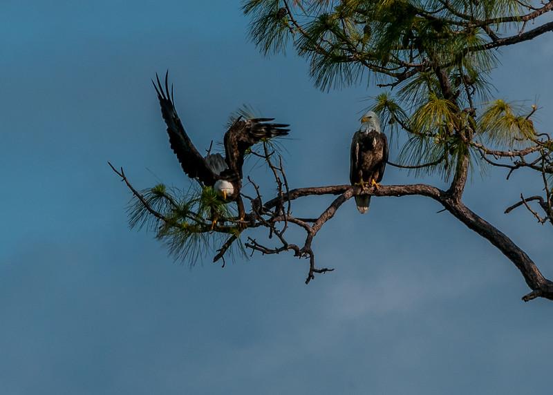 Eagles FL 2020-8.jpg