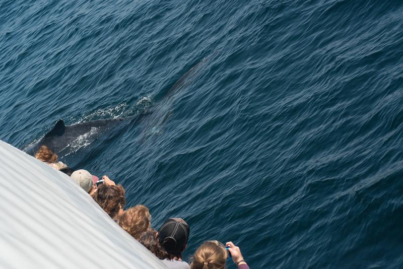 humpbacks-4141.jpg