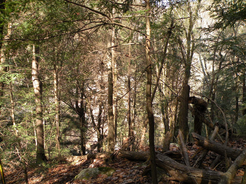 Lots of downed trees, lose rocks, and steep terrain