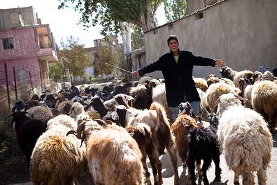 Bedoins of the Bekaa