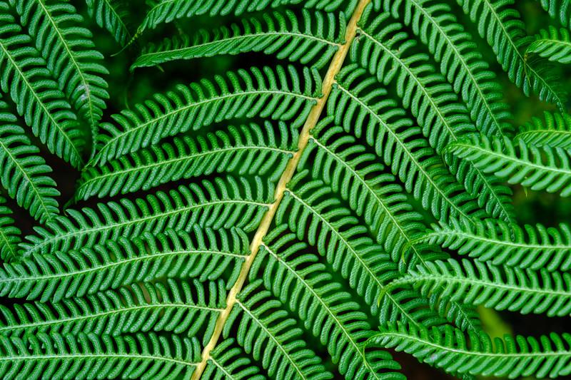 20190511 Glasgow Botanic Garden  025.jpg