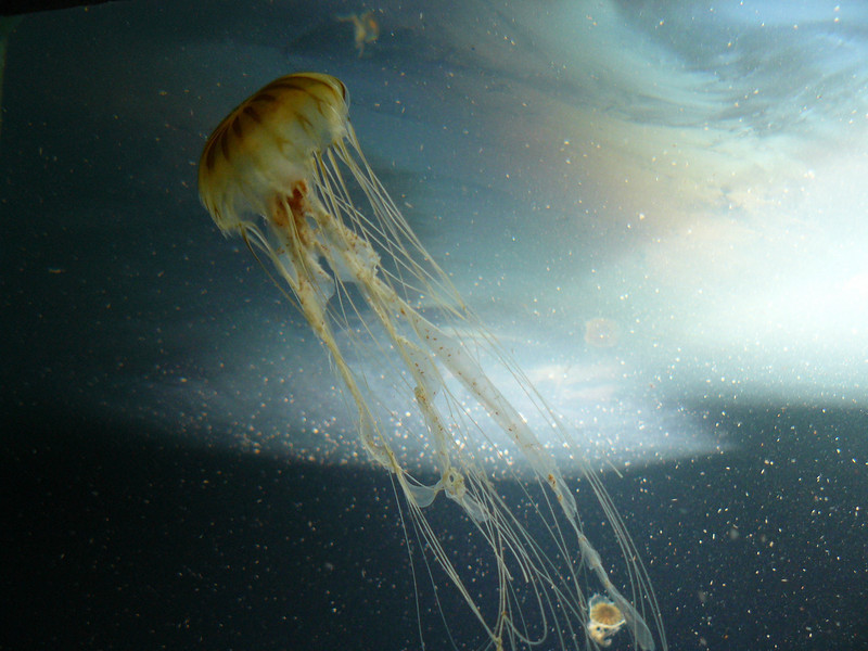 A jellyfish at Berlin Zoo. Not the best picture in the world.