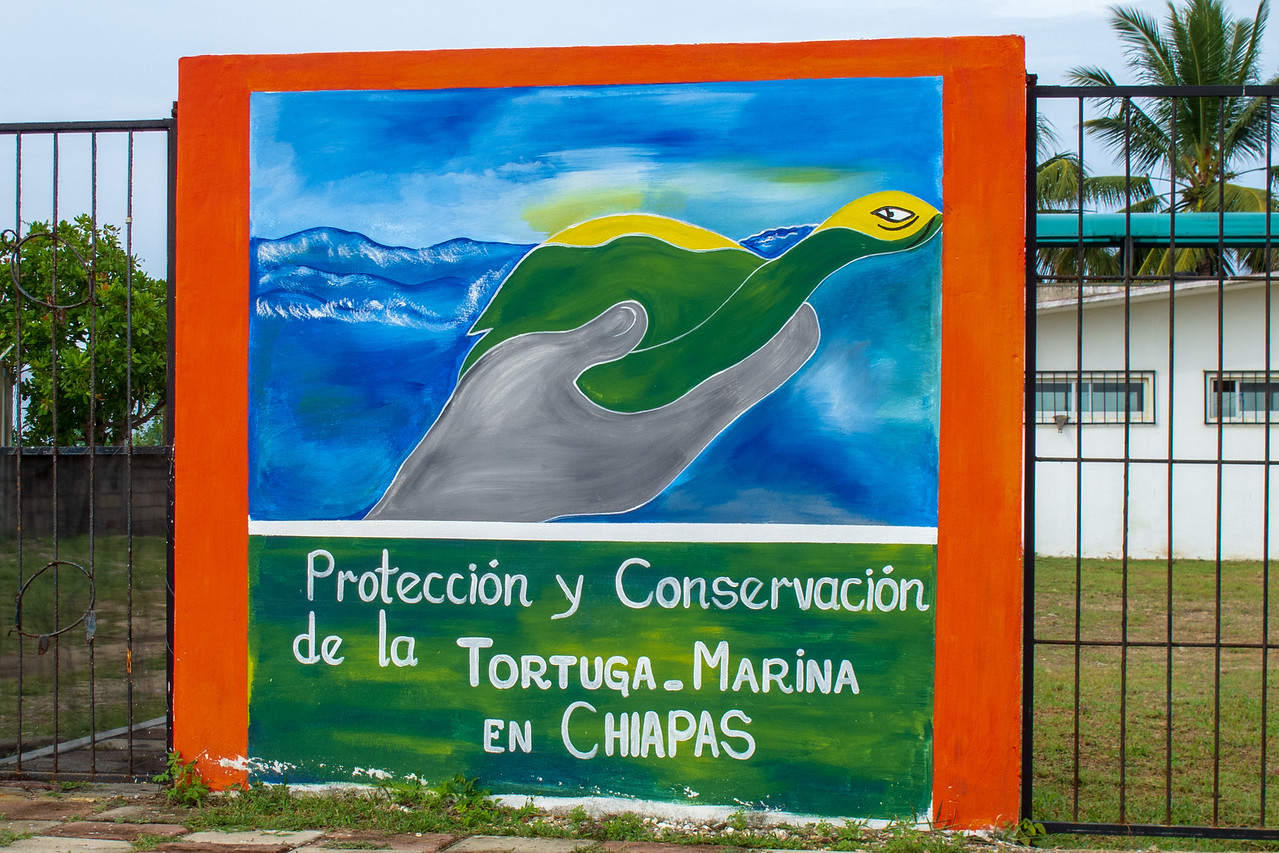 Chiapas' Environmental and Natural History agency's Proteccion y Conversación de la Tortuga Marina en Chiapas