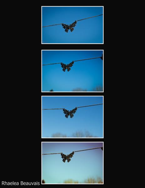 butterfly_1 (1).jpg