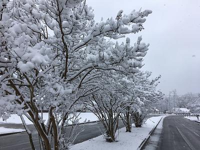 SNOW Dec 8 2017