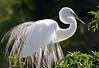 0004 - Egrets 2010-15-Edit