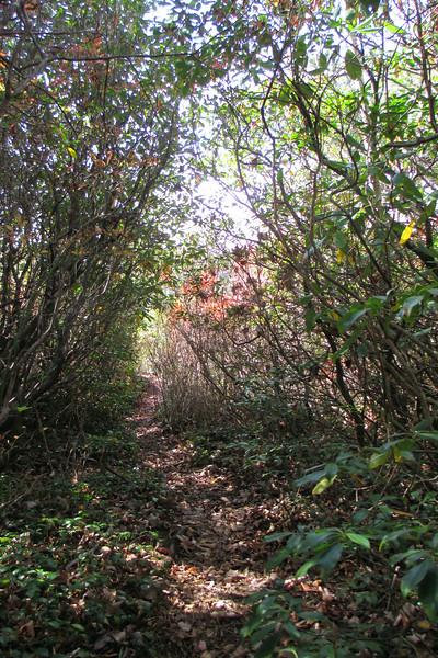 Big Green Trail - 4,150'