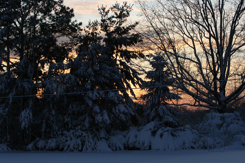 snow 2010 feb IMG_2387 (11).JPG