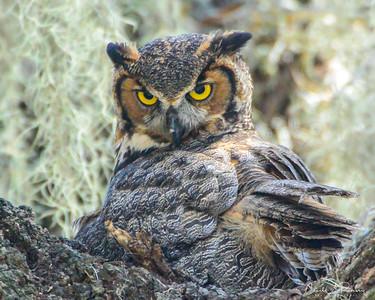 2014 OPC Owls