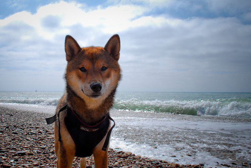 dogs_beach-104.jpg