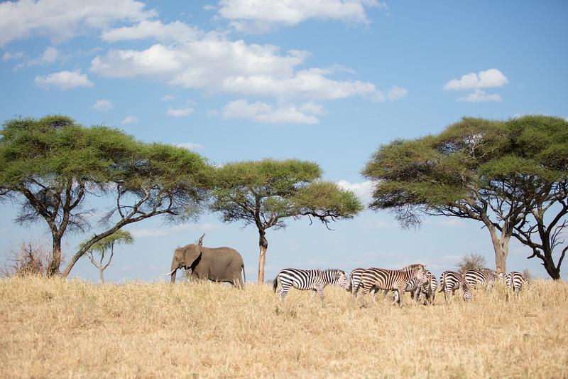 Africa - 101916 - 7814.jpg