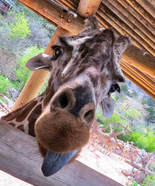 Cheyenne Mtn Zoo (122).jpg