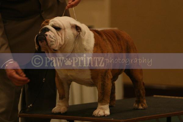 Long Island Bulldog Club 2/8/14 PM show