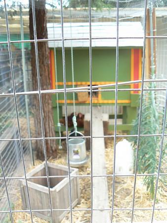 Chicken-Coop-making