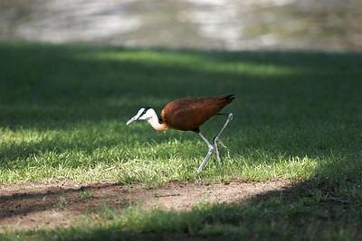 UAE escaped birds