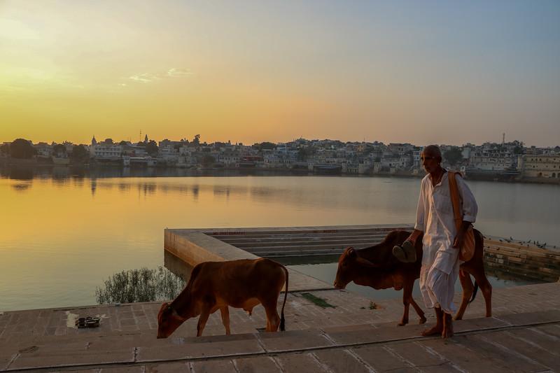 India-Pushkar-2019-6489.jpg