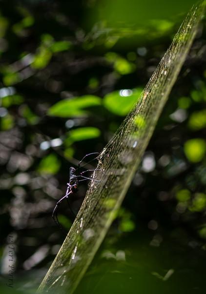 SPIDER - WEB-2302.jpg