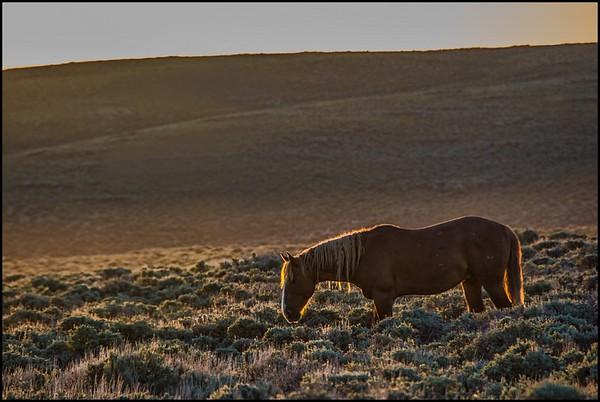 Wyoming's Wild Horses, June 2014