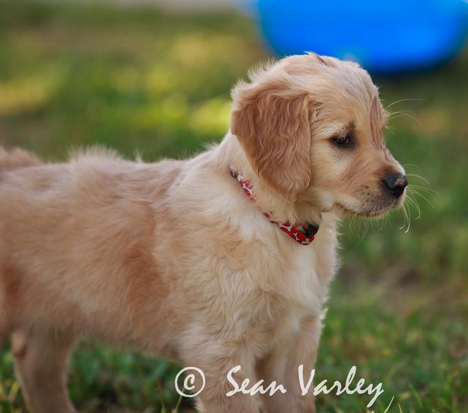 2011.04.16 Daisy 0114.jpg