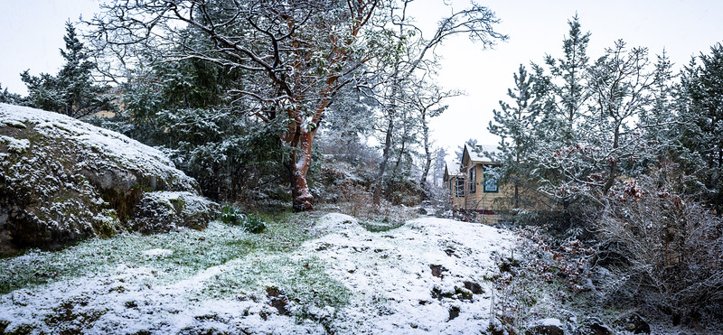 snowy yard.jpg