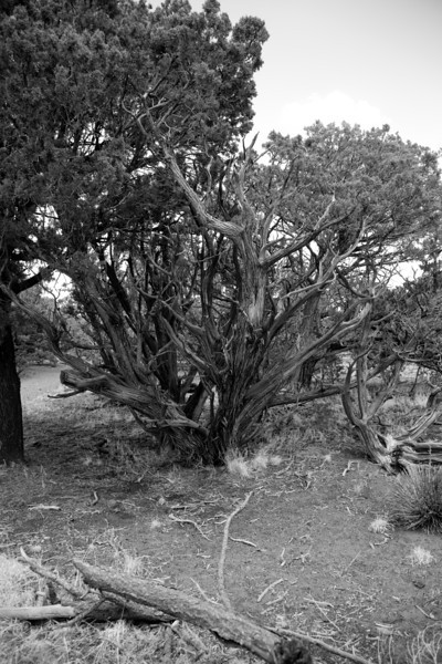 Arizona2014-80.jpg