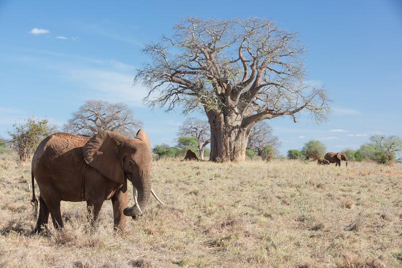 Africa - 102016 - 7932.jpg