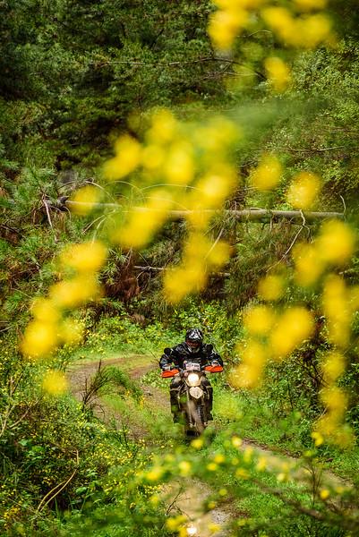 2019 KTM New Zealand Adventure Rallye (349).jpg