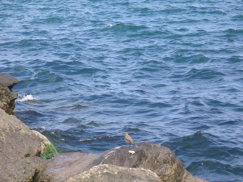 Bird on the edge