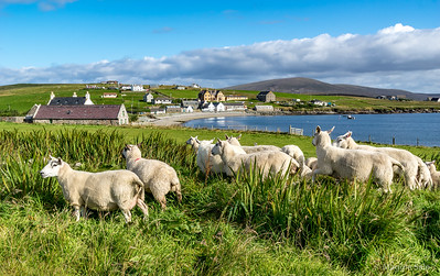 Shetland 2019