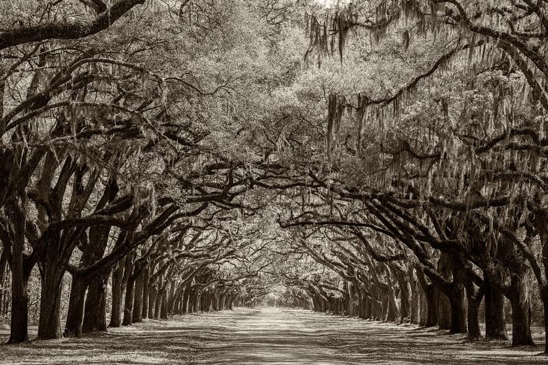 Savannah 0216.jpg