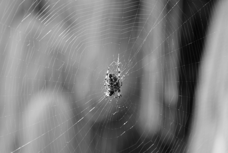 …and I got bored so I started to take pictures of spiders…...