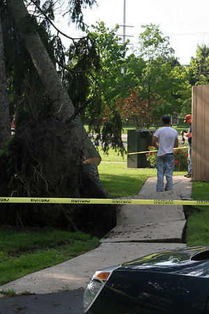 Storm Damage Trees