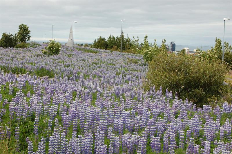 Iceland 6-18-1 013.JPG