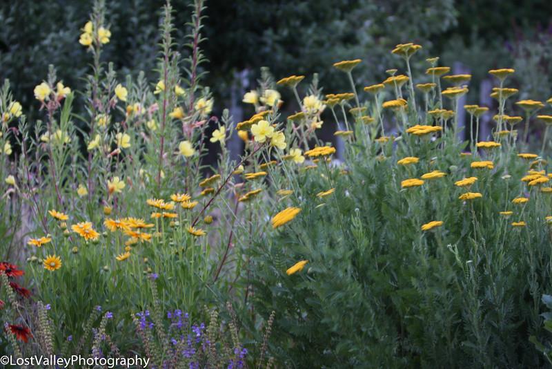 Flora-0377.jpg
