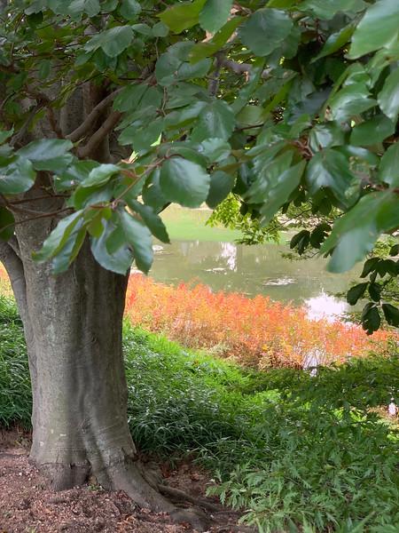 Chicago Botanic Garden 137.jpg