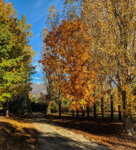 Afternoon Autumn Walks