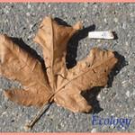 ecology.mp4