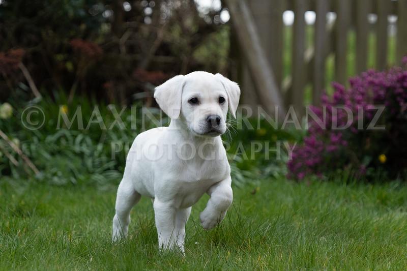 Weika Puppies 24 March 2019-8691.jpg