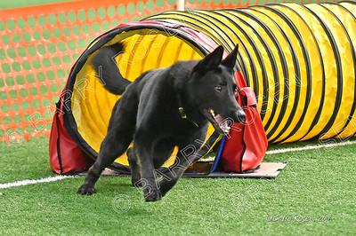 BLACK DOG MYTH DISPELLED