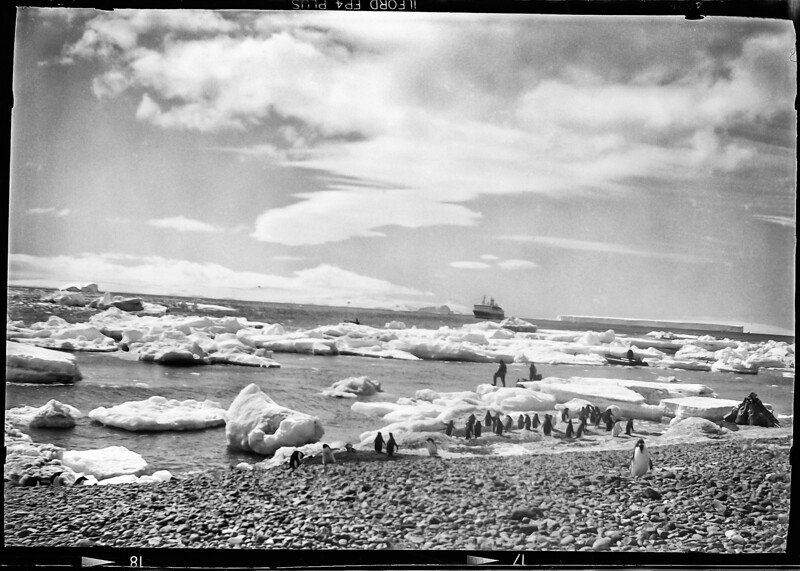 Adelies and ship-film-053 5x7.jpg