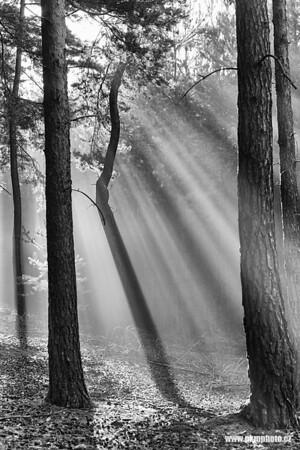 Black & White (Černobílé)