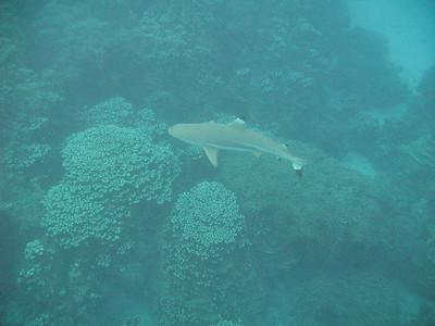 2018-02-18 Fisheye (2 Turtles, Barracuda & a Shark)