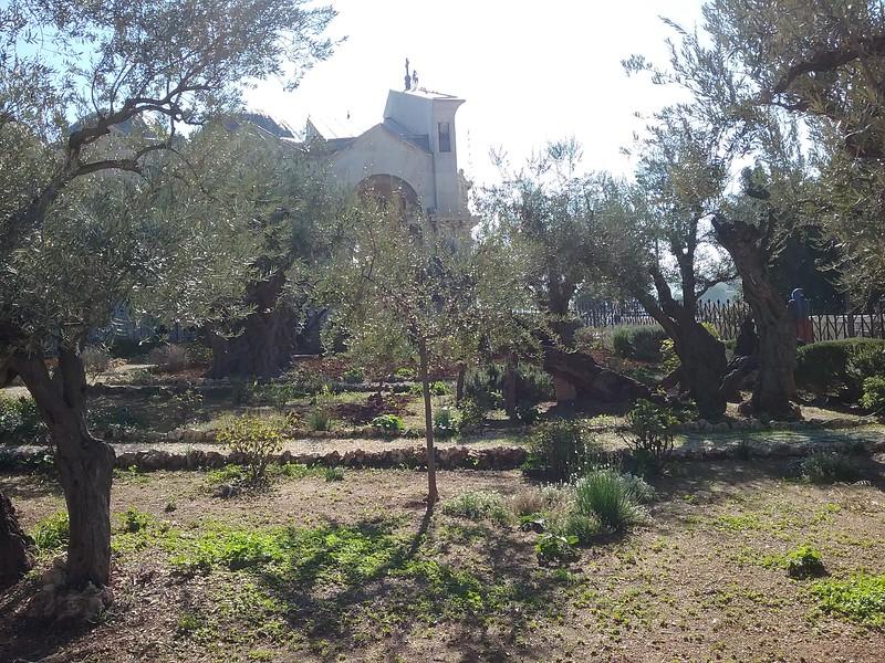 mt. of olives day 8.jpg
